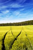 stock photo of track field  - Deep and visible forking tractors tracks in a wheat field - JPG