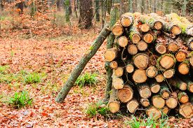 stock photo of cutting trees  - Wooden logs - JPG