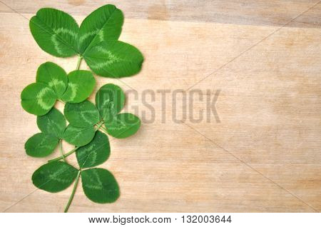 Green Spring Leaves Clover On Wood Background