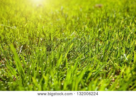 background made of green grass