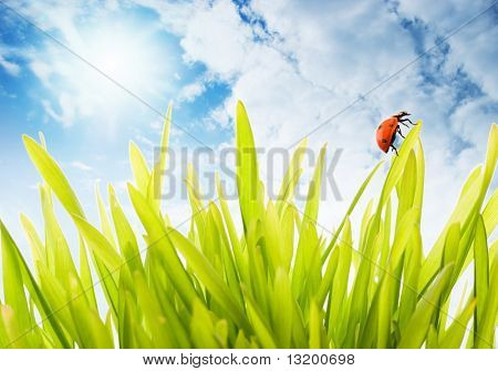 Fresh green grass over cloudy sky
