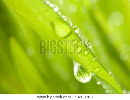 Nahaufnahme Schuss von grünem Gras mit Regen fällt auf Sie