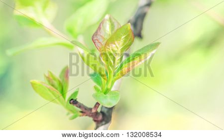 Young green spring leaves at sunny day