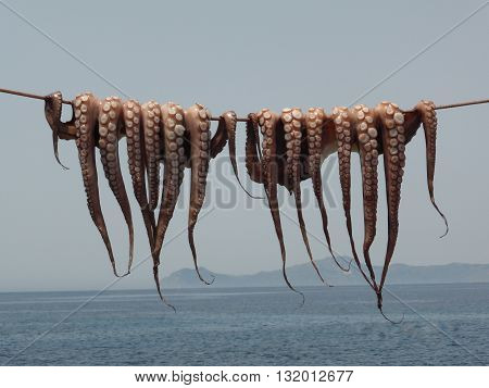 Two octopus hanging on a string over the sea