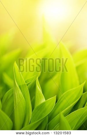 Fresh green grass (shallow DoF)
