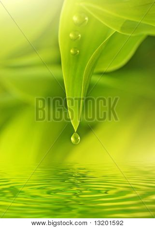 Green fresh leaves with water drops on it