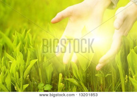 Human hands touching green grass. Beautiful shining between them.