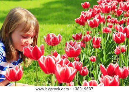 little girl smells red tulips on the flower-bed