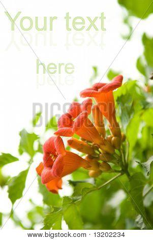 Beautiful fresh flowers isolated on white background
