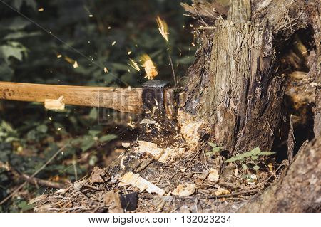 Chips fly apart after the lumberjack chopping wood