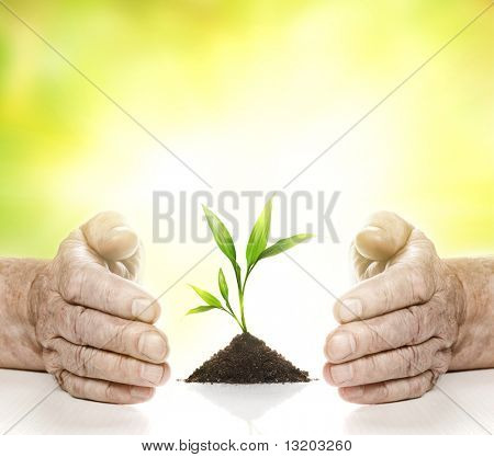 Old hands and young plant between them