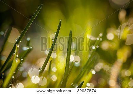 Closeup Of Waterdrops