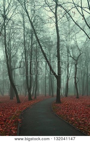 Lonely alley in the park in foggy weather - foggy mysterious landscape in with bare trees and red fallen leaves on the foreground. Creative filter applied.