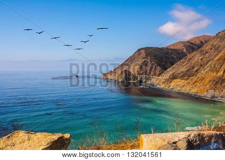 California State Route 1, USA. The flock of cranes flying over the ocean bay with emerald water