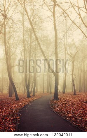 Lonely walkway in the autumn deserted park in foggy weather - picturesque autumn landscape. Vintage and creative filter applied