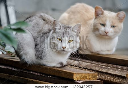 Two stray cats sit on the boards, and look forward to when they will feed