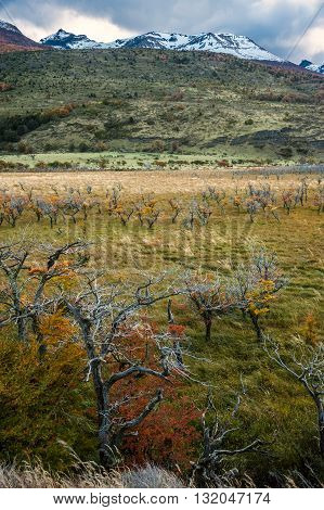 Autumn In Patagonia. The Torres Del Paine National Park In The South Of Chile Is One Of The Most Bea