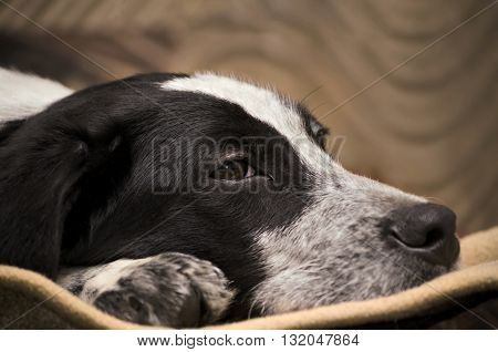 Sad, homeless puppy was lying on the Mat, close-up, head and paw