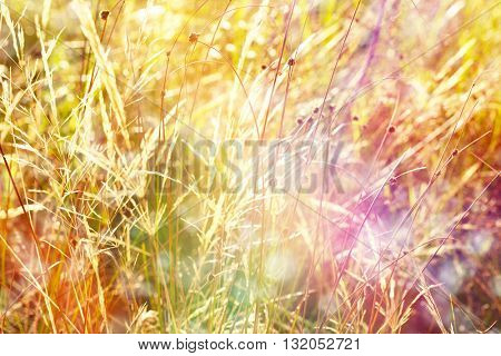 Beautiful wild flowers on meadow with sunlight