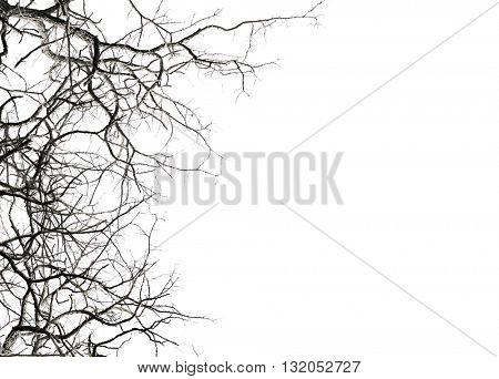 Leafless tree branches, isolated on white