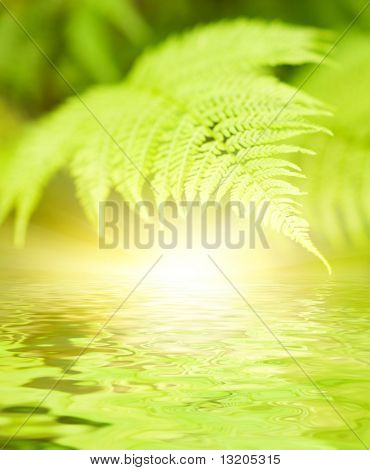 Green leaves reflected in rendered water