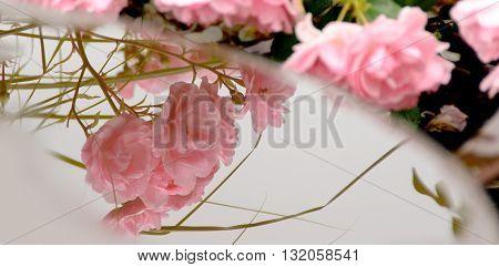Roses In Redmond Town Center After Rain