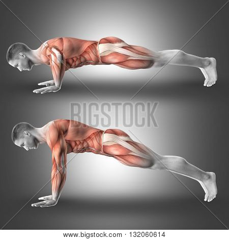 3D render of male figure in push up pose highlighting the muscles used in the exercise