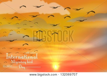 Vector illustration of Migratory birds day on sunset