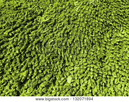A background with a detailed macro view of green moss growth near a river.
