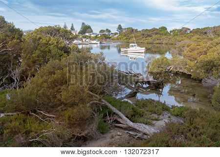 Beautiful view of bending twisting tree trunk and other salt tolerate plants at Lake Butler boat Marina in the evening in Robe, South Australia.