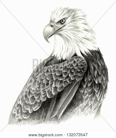 Eagle`s head on white blackground. Hand drawing