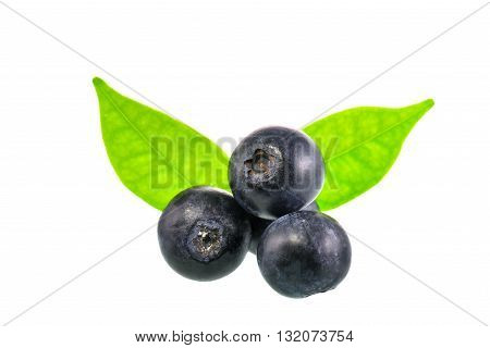 Blue berry on white background with clipping path
