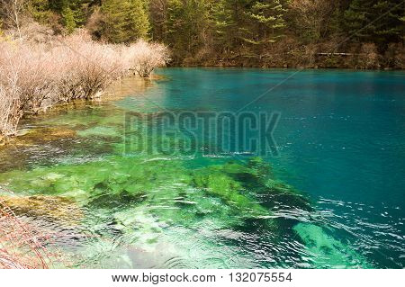 Interwoven in the clear water, green, blue lake trees in pregnant with vitality