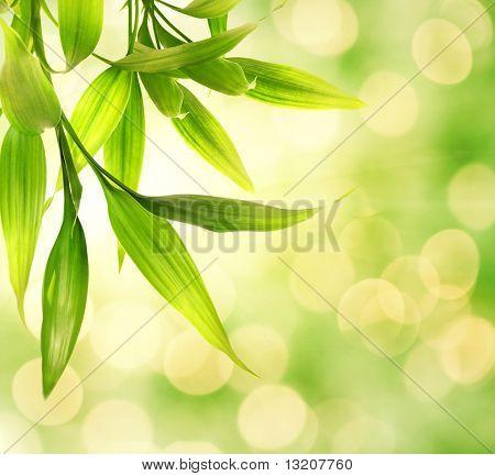 Bambus Blätter über abstrakte der Hintergrund jedoch unscharf