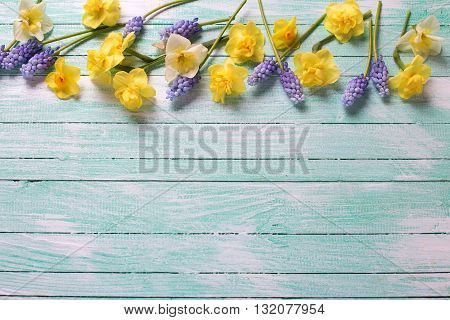 Border from fresh yellow and blue spring flowers on turquoise wooden planks. Selective focus. Place for text.