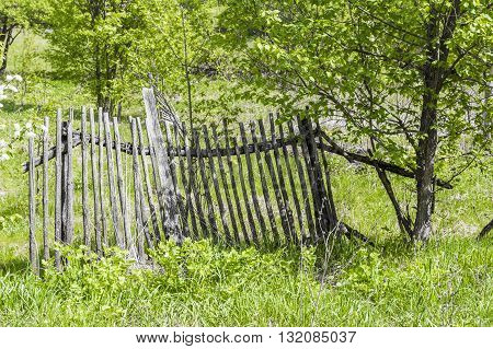 Ruined wooden rural fence in the forest