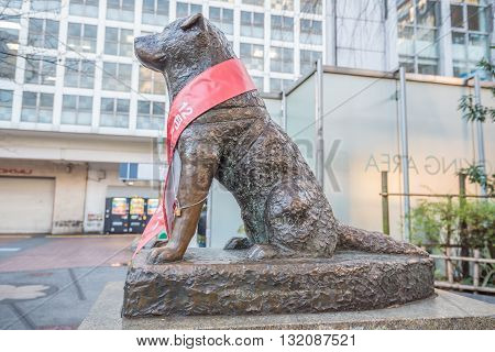 Tokyo Japan - November 20 2015: View of Bronze statue of Hachiko at Shibuya Station. A dog is remembered for his remarkable loyalty to his owner which continued for many years Tokyo Japan.