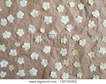White tender viburnum flowers on the brown crumpled paper