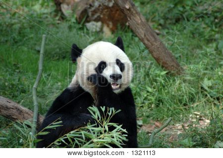 Panda Secrets