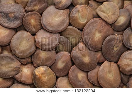 Organic dry White Sirius (Albizia procera) seeds. Macro close up background texture. Top view.