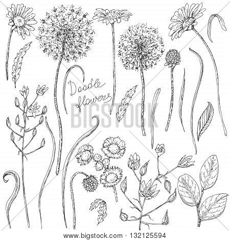 Hand drawn set of doodle wildflowers. Black and white flowers buds and leaves for coloring. Floral elements for decoration. Vector sketch.