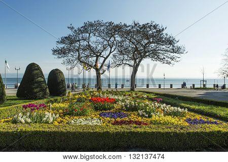 Flowering park at Lake Constance in Friedrichshafen harbor.