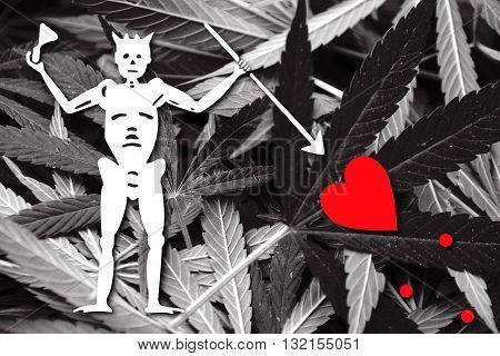 Blackbeard Pirate Flag on cannabis background. Drug policy. Legalization of marijuana