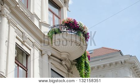 concrete old balcony with fresh bloomed flowers