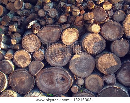 Thematic background with sawn wood stacked in the woodpile. The texture of the wood, evening lighting.