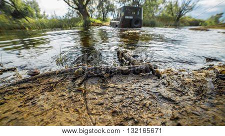 river swamp ukraine snails dnipro outodoor day