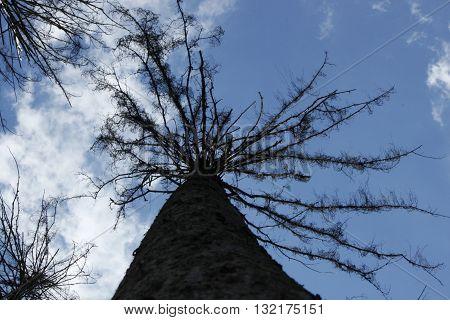 дерево на фоне голубого неба, сфотографировано снизу-ввер