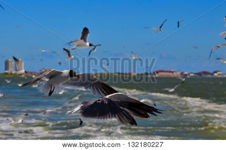 Flock of seagulls soaring above tropical ocean waters.  Coastal beach town in the distant horizon.