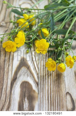 Spring ranunculus buttercup. Yellow wild ranunculus flowers close-up photo on the wooden rustic table