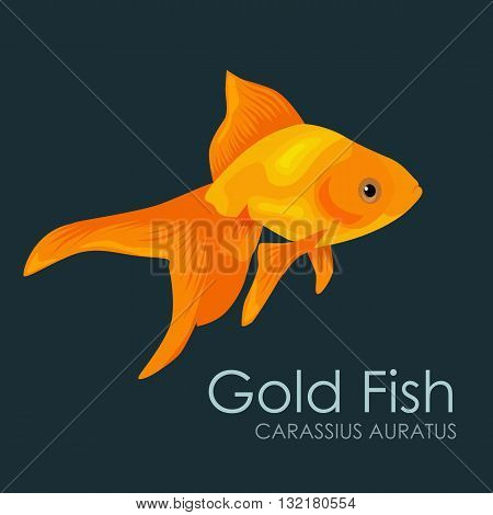 Aquarium fish Gold Fish, vector illustration isolated on dark background. Fish flat style vector illustration.